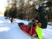 Dogsledding: Races, Kennel Tours and Mushing your own team!